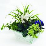 растения в контейнере