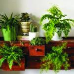 растения в шкафу